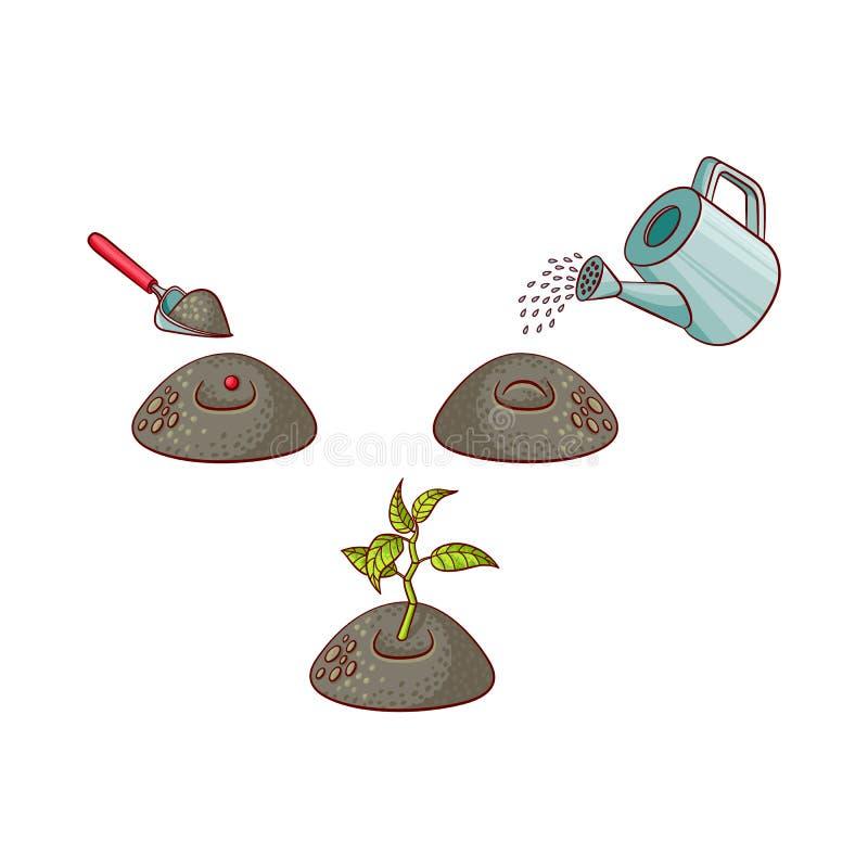 Vector flat tree planting stages symbols set vector illustration