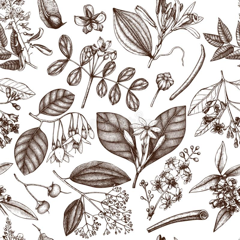Vector floral background. Hand drawn Perfumery and cosmetics ingredients illustration. Aromatic and medicinal plant seamless patte. Rn stock illustration