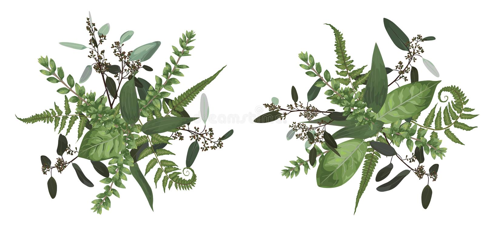 Vector floral bouquet design set, green forest leaf, fern, branches boxwood, buxus, eucalyptus. Watercolor style, herbs. Wedding. For invite card Isolated stock illustration