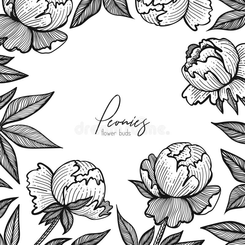 Vector floral frame with peonies. Detailed graphic flowers for your design small boxes, business cards, backgrounds and stock illustration