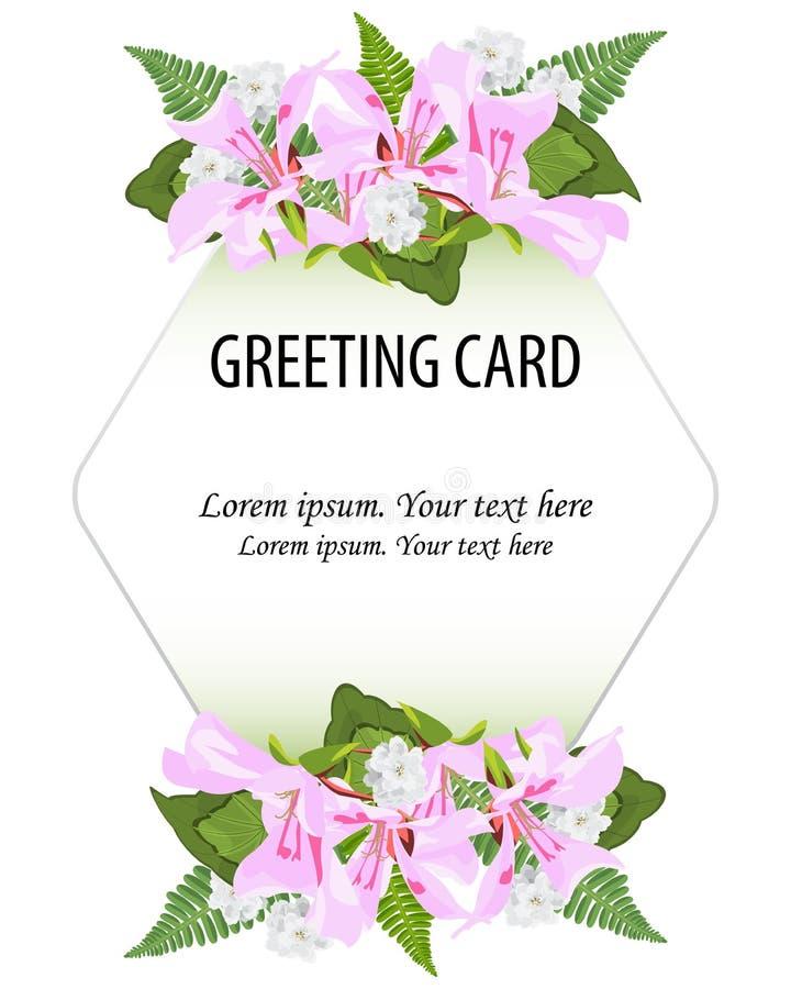 vector floral greenery design.Pink,white flowers of pelargonium, royalty free illustration