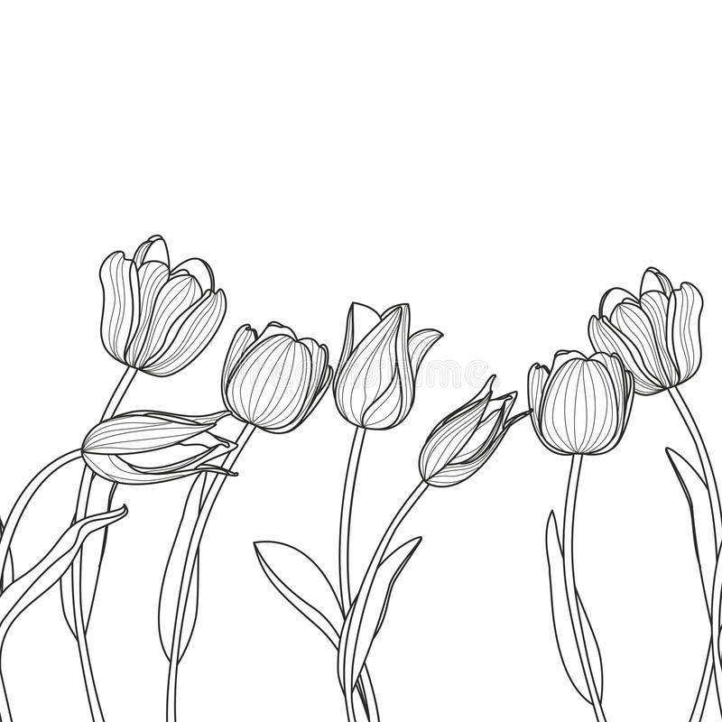 Vector floral seamless horizontal pattern. Black and white elegant background with hand drawn tulip flowers. vector illustration