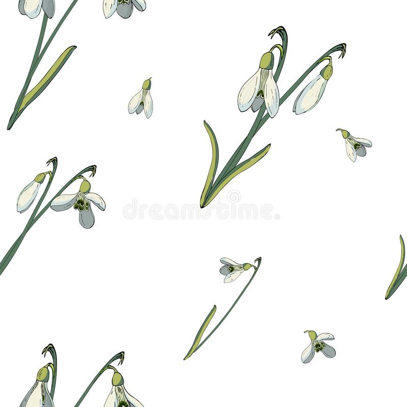 Vector floral seamless pattern with snowdrops royalty free illustration