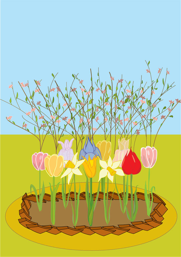vector a flower-bed with tulips, narcissuses, iris royalty free stock photo