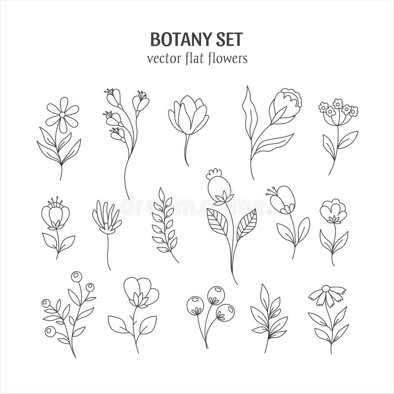 Line Botany Collection Stock Vector Illustration Of Blossom 116826836