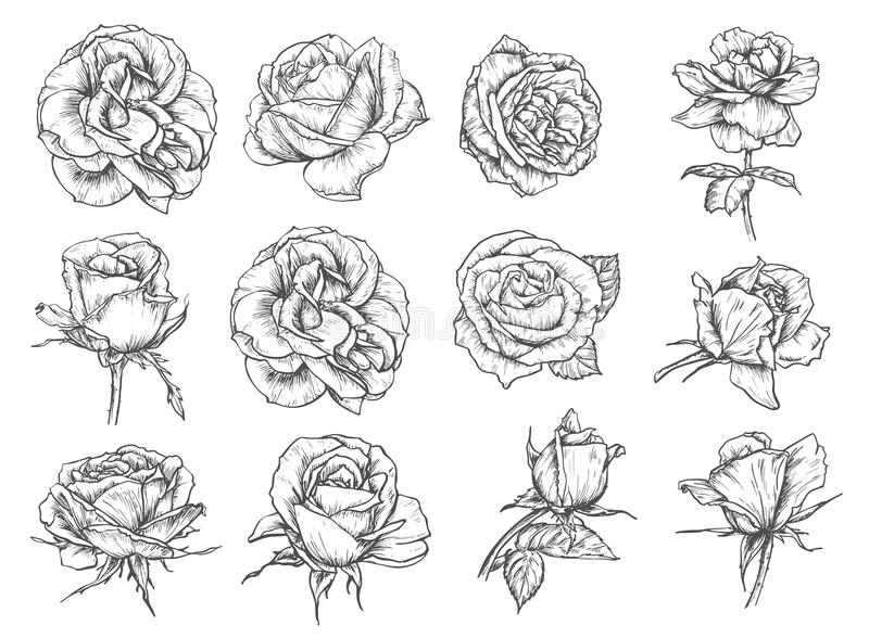Vector flowers roses sketch icons stock illustration