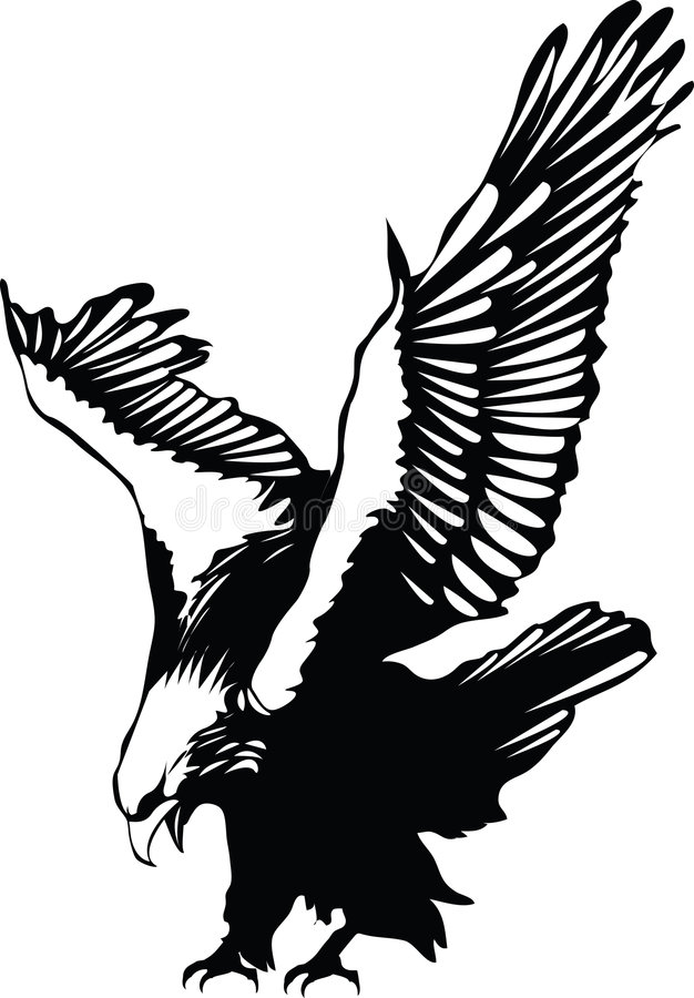 Vector flying eagle royalty free stock images