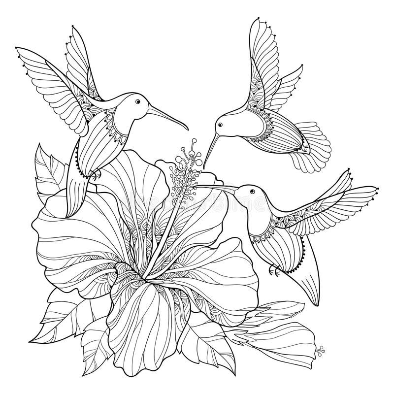 Vector flying Hummingbird or Colibri and ornate Hibiscus in contour style isolated on white background. Outline exotic bird. royalty free illustration