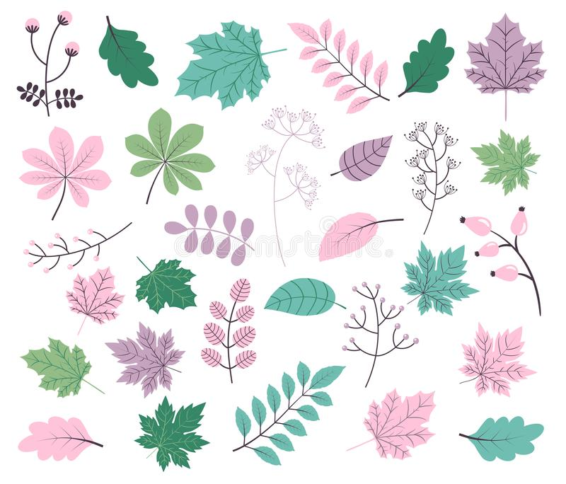 Vector foliage set with tree leaves and plants and twigs. In different shapes and colors royalty free illustration