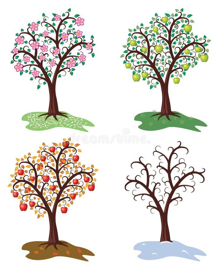 vector four seasons of apple tree royalty free illustration