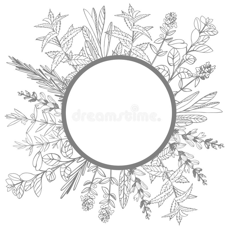 Vector frame with hand drawn herbs. Sketch illustration. royalty free illustration