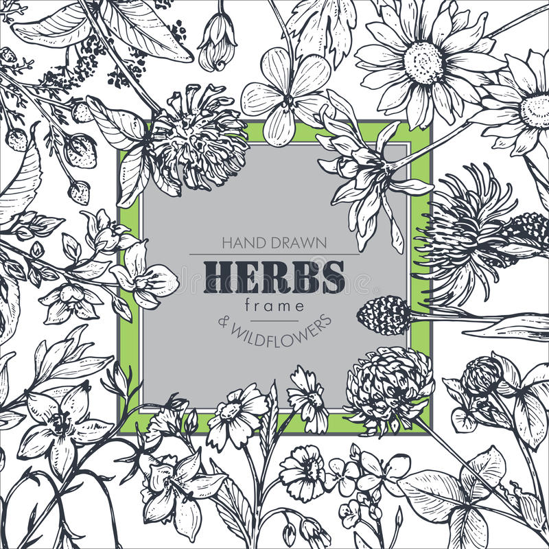 Vector frame with herb and wildflower elements. Vector frame with black and white hand drawn herb and wildflower elements for wedding invitations, birthday cards stock illustration