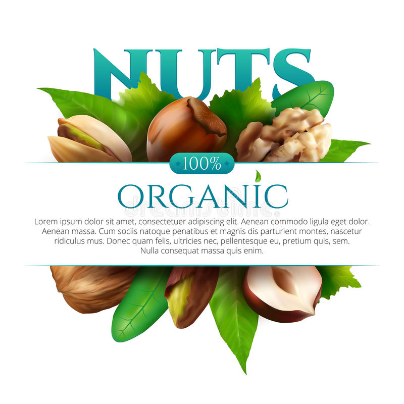 Vector frame of realistic nuts with leaves isolated on white background vector illustration