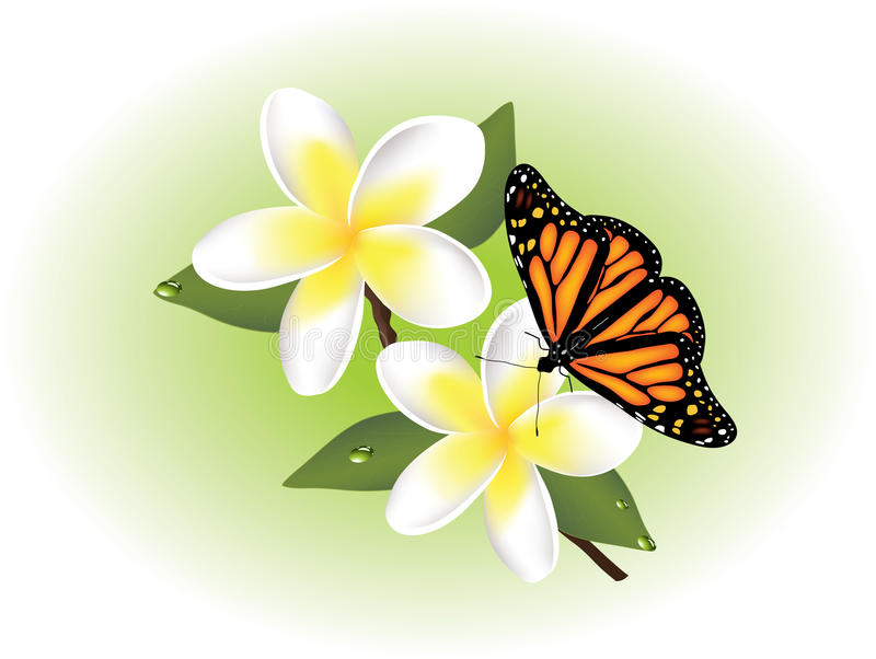 Download Vector Frangipani And Butterfly Royalty Free Stock Image - Image: 23305076