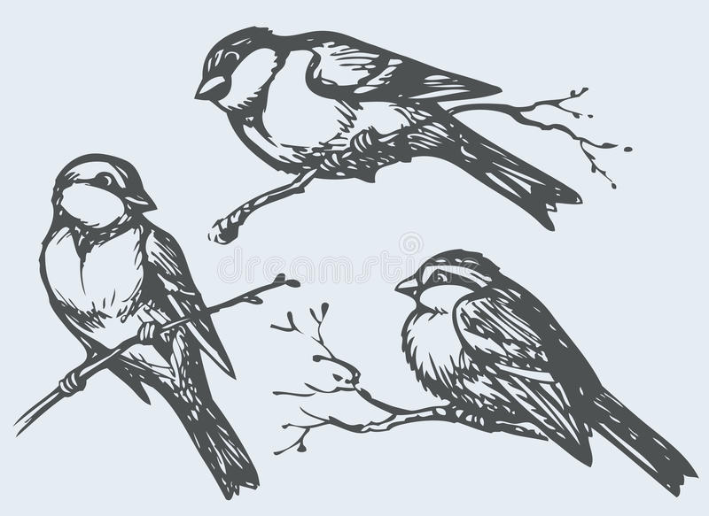 Vector freehand drawing. Tits, sparrows and bullfinches on branches. Vector freehand drawing of series of monochrome sketches Birds. Chickadee, sparrow and vector illustration