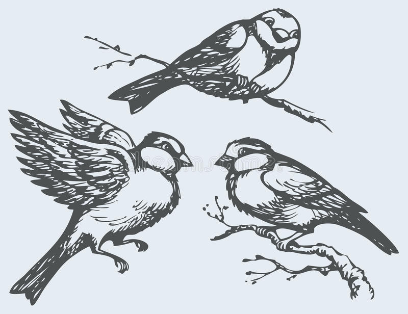 Vector freehand drawing. Tits, sparrows and bullfinches on branches. Vector freehand drawing of series of monochrome sketches Birds. Chickadee, sparrow and royalty free illustration