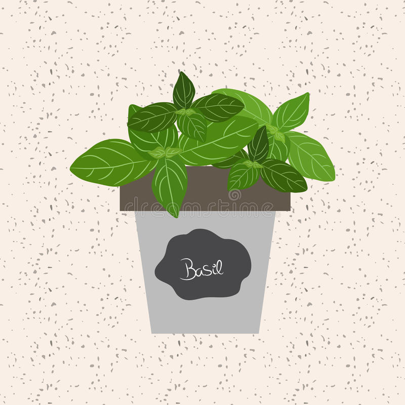 Vector - Fresh basil herb in a flowerpot. Aromatic leaves used t. O season meats, poultry, stews, soups, bouquet granny vector illustration