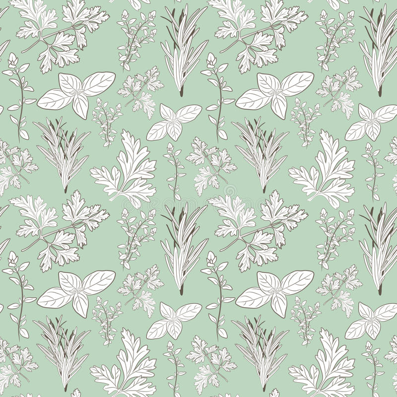 Vector fresh parsley, thyme, rosemary, and basil herbs. Aromatic. Leaves used to season meats, poultry, stews, soups, Bouquet granny. Seamless pattern stock illustration