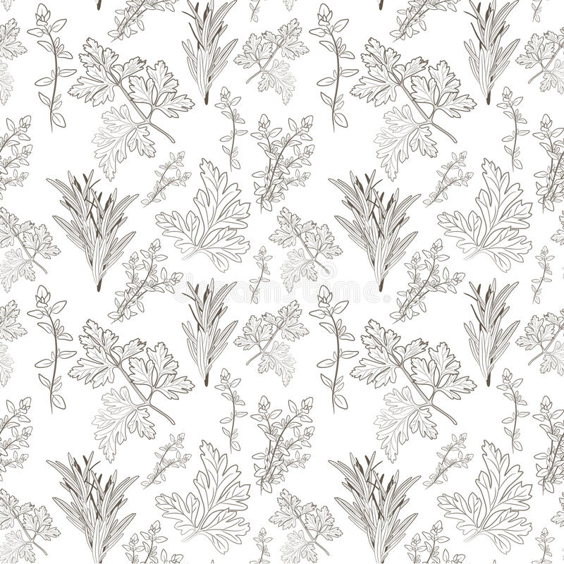 Vector fresh parsley, thyme and rosemary herbs. Aromatic leaves. Used to season meats, poultry, stews, soups, Bouquet granny. Seamless pattern stock illustration