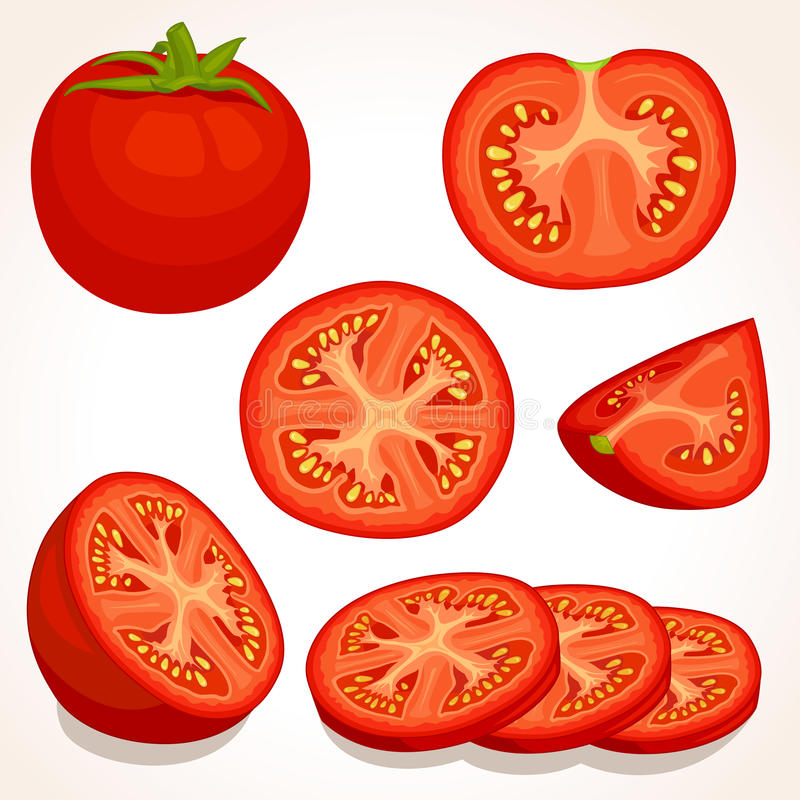 Vector fresh tomato. Sliced, whole, half red tomatoes. stock illustration