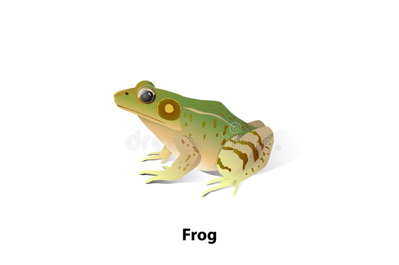 Vector frogs on a white background, amphibians, insects are their food. vector illustration
