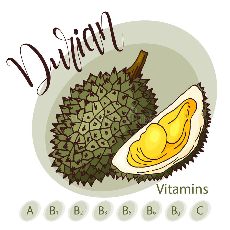 Vector fruit element of durian. Hand drawn icon with lettering. Food illustration for cafe, market, menu design royalty free illustration