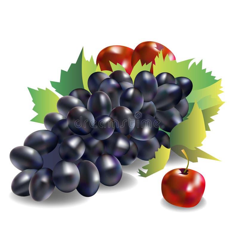 Free Vector Fruit Food Grape Vine Fresh Royalty Free Stock Photo - 89616065