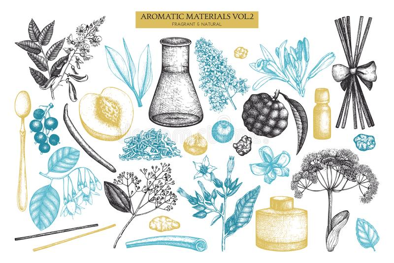 Vector fruits and flowers collection. Hand drawn outlines. Vintage perfumery and cosmetics ingredients set. Aromatic and medicinal. Plant vector illustration