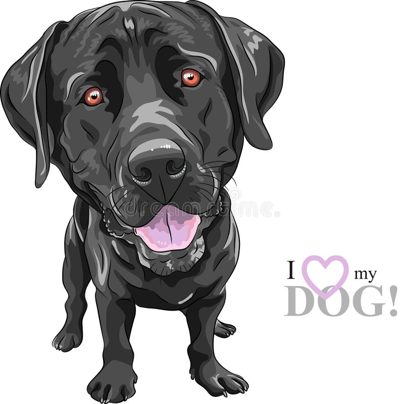 Vector funny cartoon black dog breed Labrador Retriever vector illustration