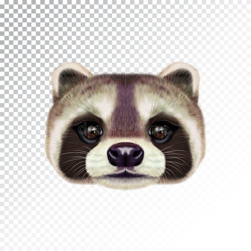 Vector Geïllustreerd gezicht van Wasbeer royalty-vrije stock afbeeldingen