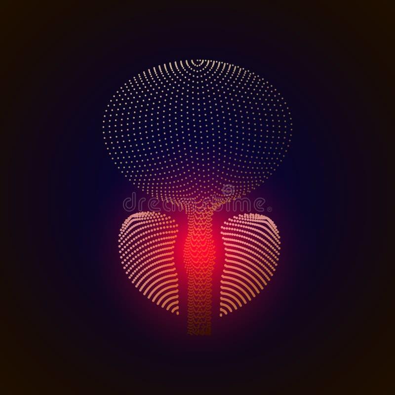 Vector geïsoleerde voorstanderklier met pijncentrum 3D wit menselijk orgaan Geneeskundeconcept met lijn illustratie van prostatit royalty-vrije illustratie
