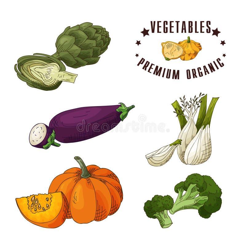 Vector Gemüseelement der Artischocke, Aubergine, Fenchel, Kürbis, Brokkoli Hand gezeichnete Ikone mit Beschriftung Nahrung lizenzfreie abbildung