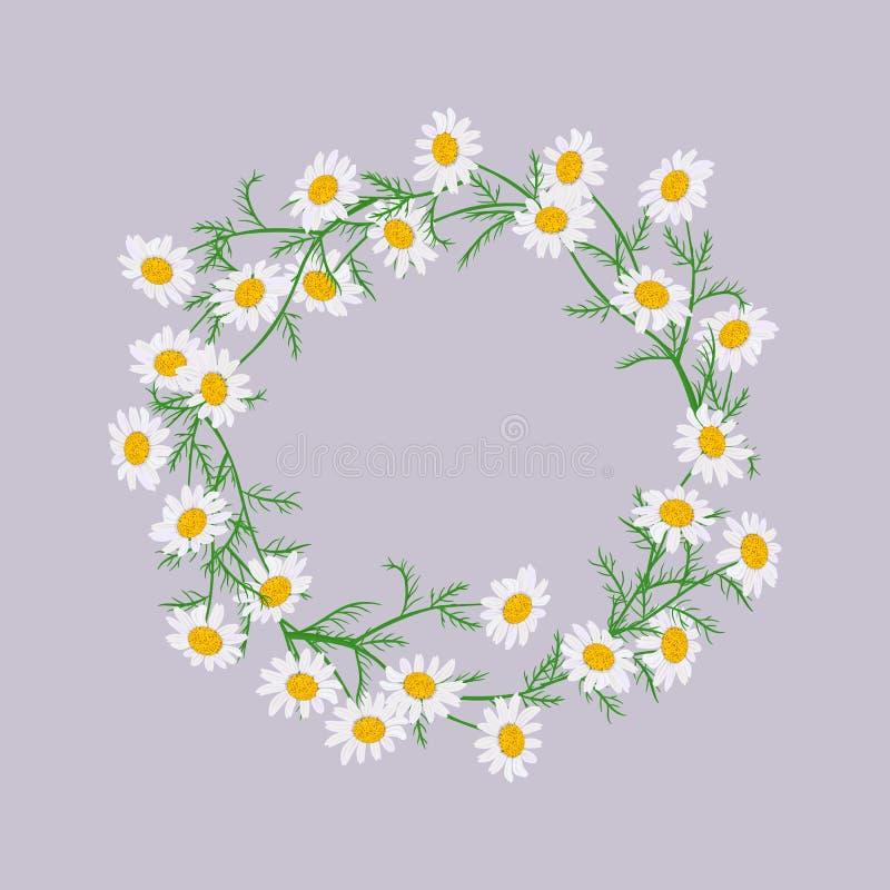 Vector geplaatste bloemen Mooie kroon op purpere achtergrond Elegante bloemenmadeliefjeinzameling vector illustratie