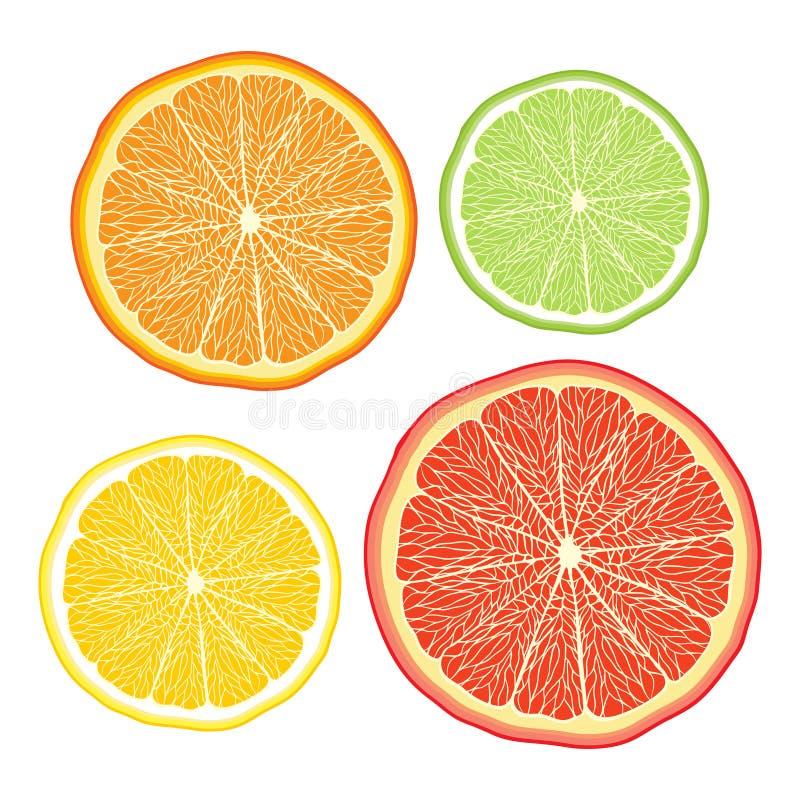 Vector gestileerde sinaasappel, citroen, grapefruit, kalk  stock illustratie