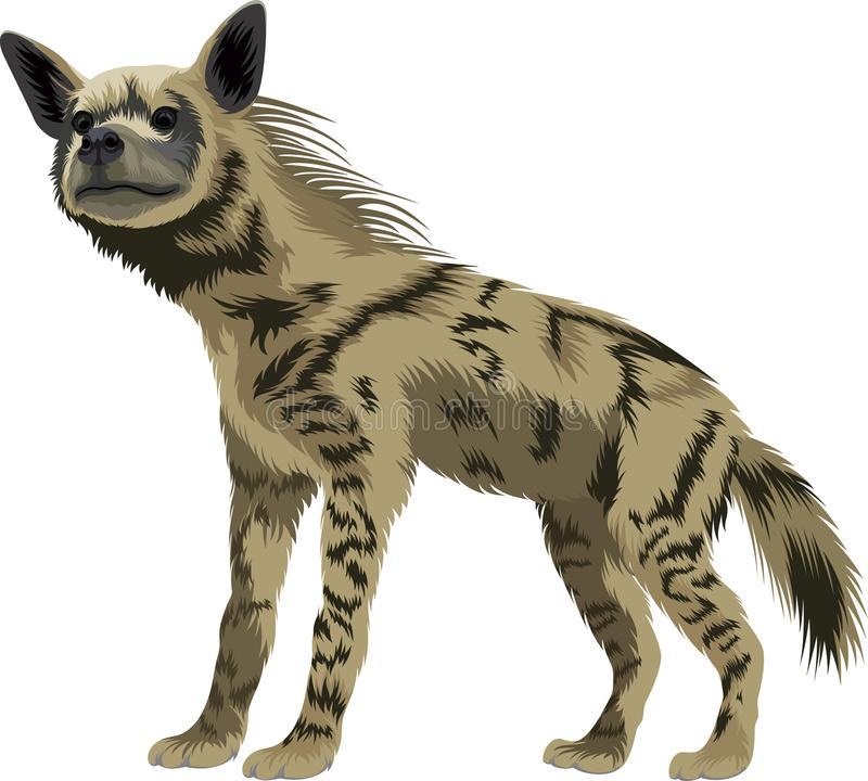 Vector gestreepte hyena stock illustratie