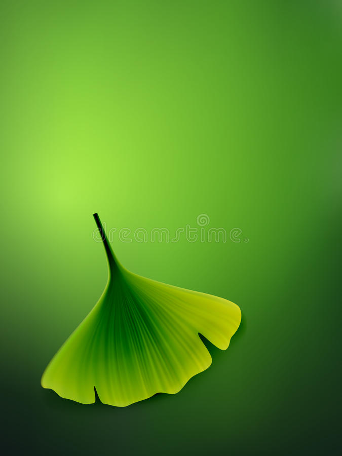Vector ginkgo leaf stock illustration