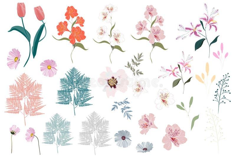Vector gli elementi botanici del grande insieme - i wildflowers, le erbe, foglia giardino della raccolta e fogliame selvaggio, fi illustrazione di stock