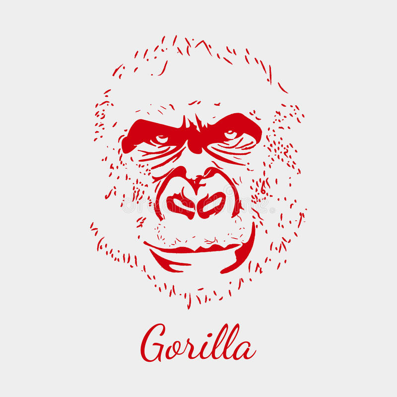 Vector gorilla. Red background. Animal postcard. stock illustration