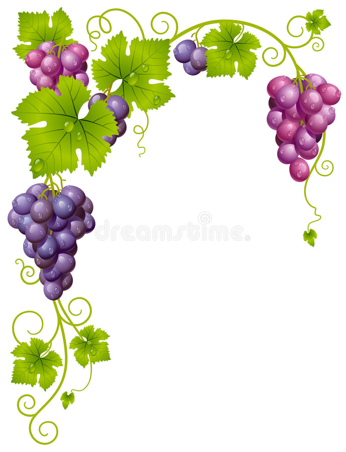 Vector grape frame. This image is a vector illustration and can be scaled to any size without loss of resolution