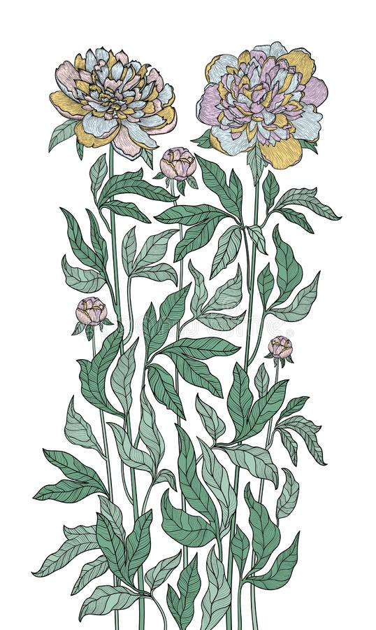 Vector graphic detailed drawing depicting a peony bush vector illustration