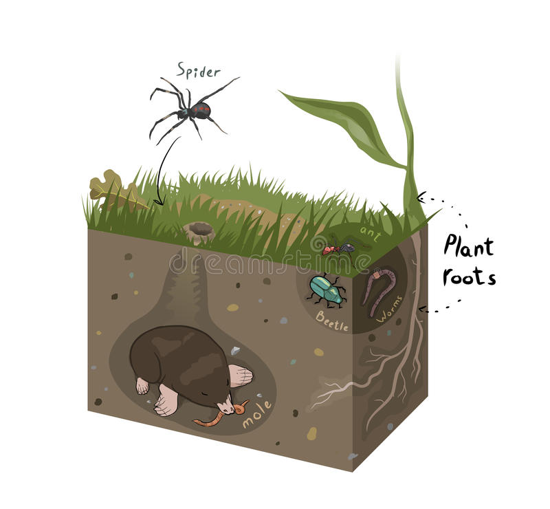 Vector graphic diagram of soil. Structure vector illustration