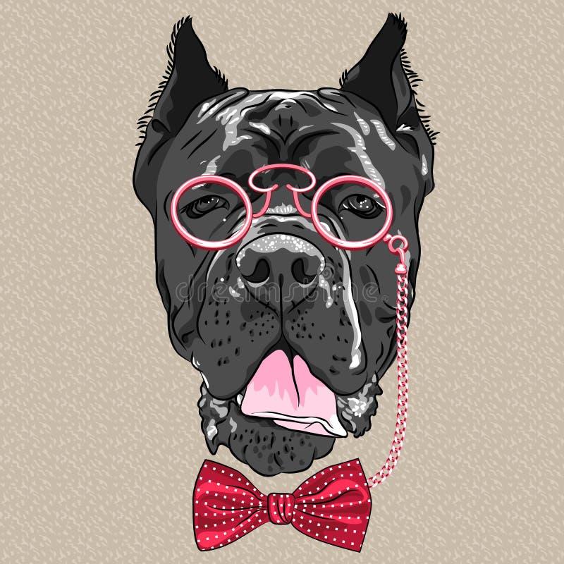 Vector grappige beeldverhaal hipster hond Cane Corso stock illustratie