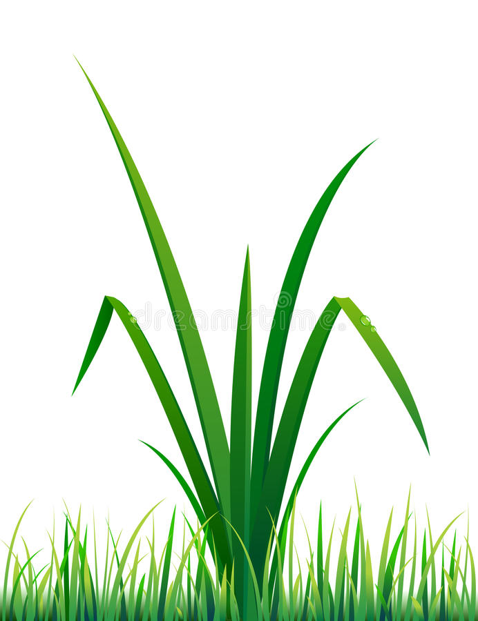 Vector grass with water drops. (This image is a illustration and can be scaled to any size without loss of resolution stock illustration