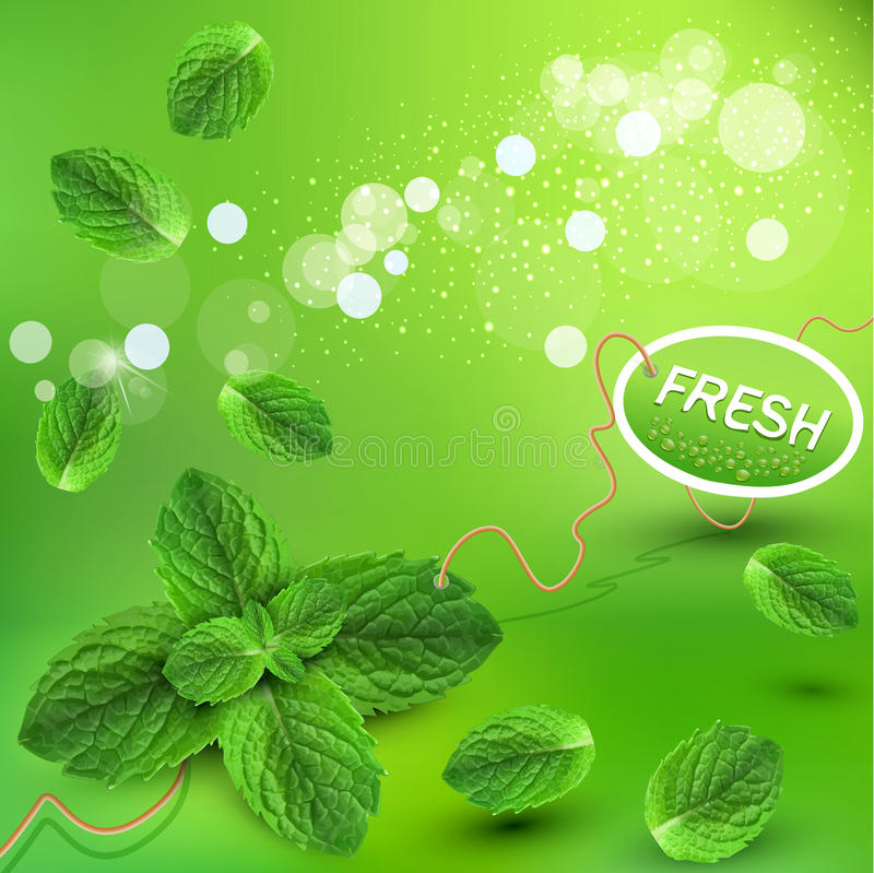 Download Vector Green Background With Fresh Mint Leaves Stock Vector - Image: 24394587