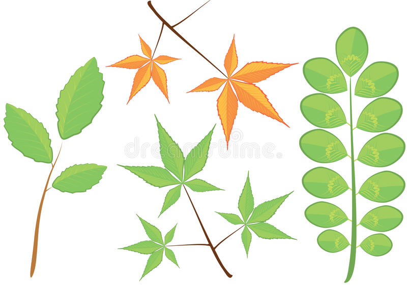 Vector green branch and leaves.Floral stock image