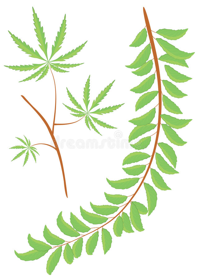 Vector green branch and leaves.Floral stock images