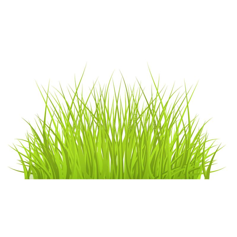 Vector green grass border for summer landscape. Design. Natural decoration element for parks, gardens or rural fields scenery. Lawn or plants object. Isolated royalty free illustration