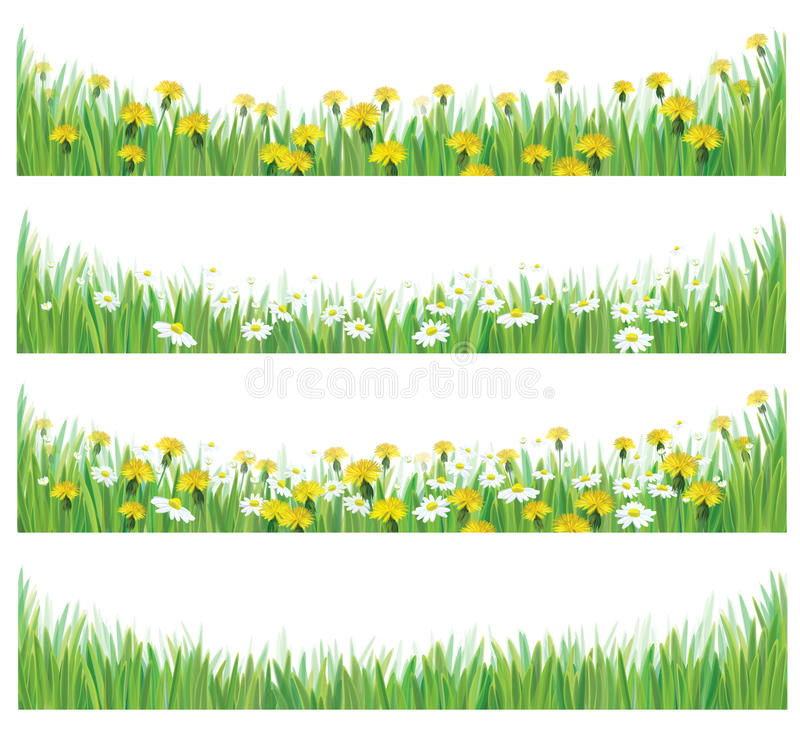 Vector green grass with chamomiles and dandelions. vector illustration