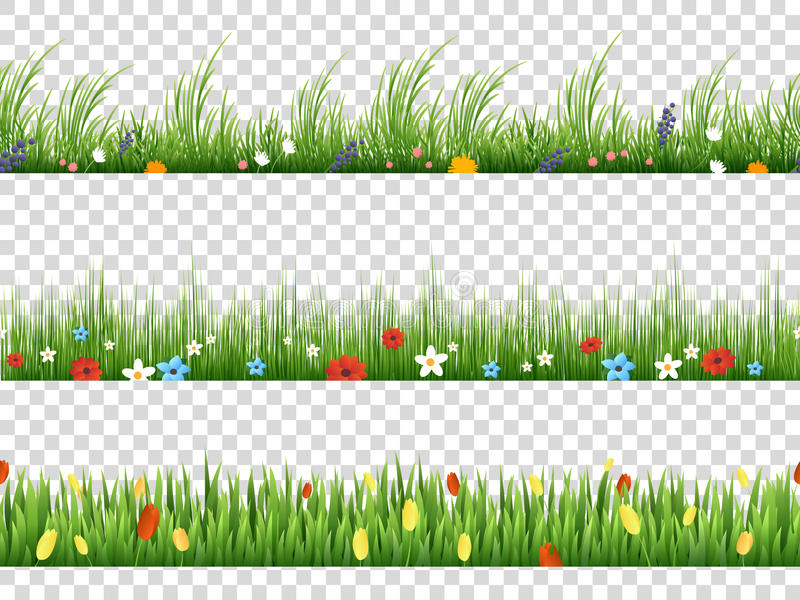 Vector green grass and spring flowers nature border patterns on transparent background vector illustration