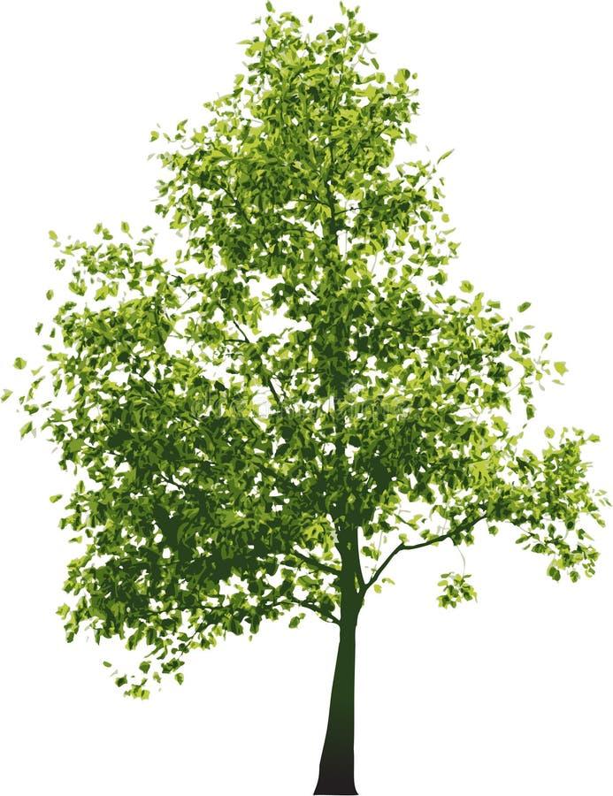 Vector green tree royalty free illustration